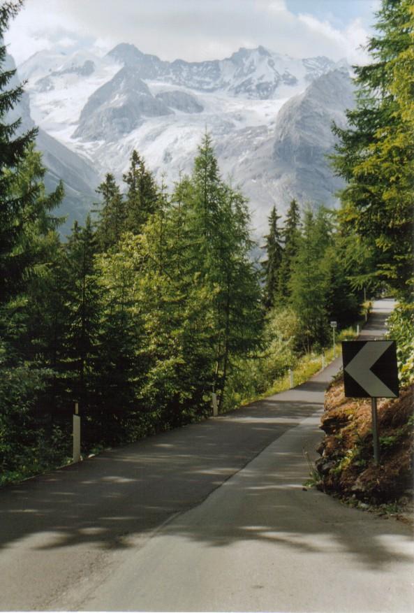Stilfserjoch-SÜd mit Lärchenwald und Gletscherkulisse