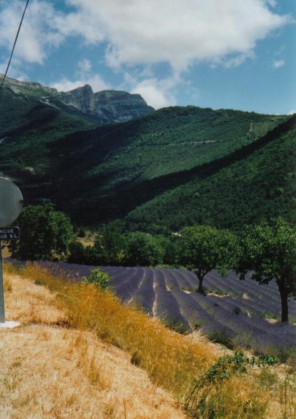 Lavendelfeld am Col de Rousset