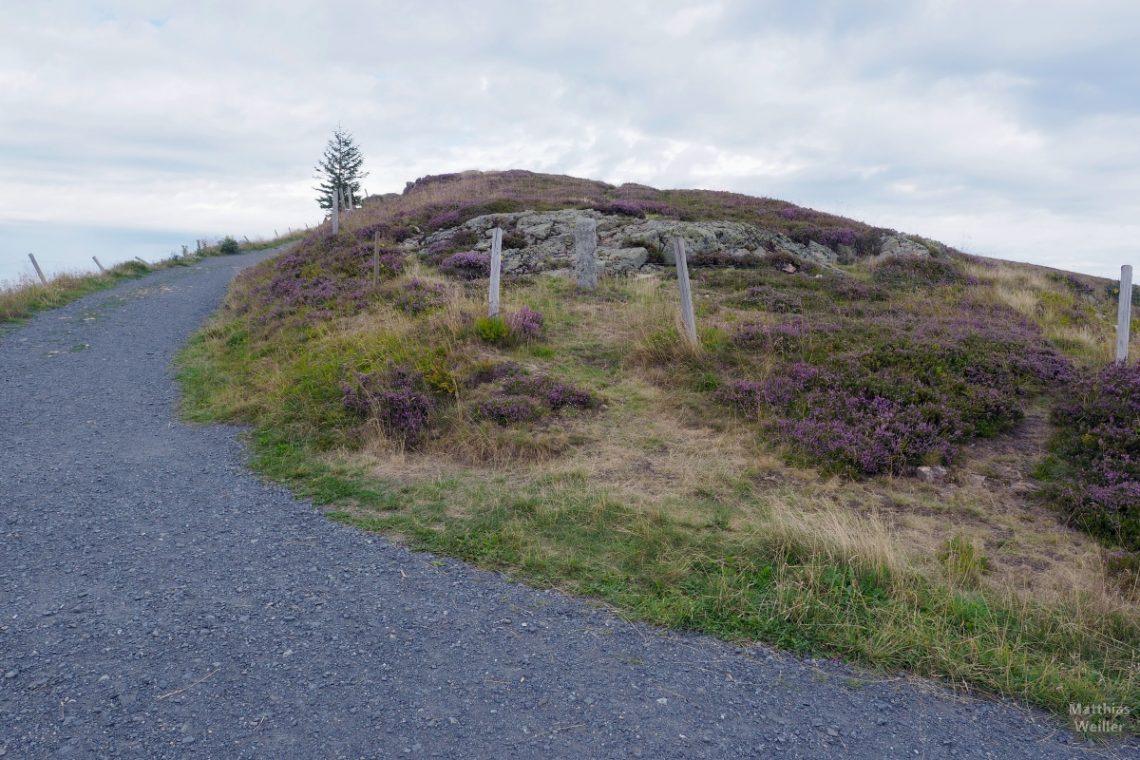 Belchenkuppe, oberer Weg mit Heidekraut