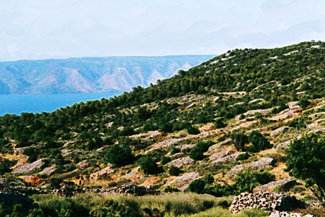 Stilisiertes von der Steinmauernweiden in Hvar mit Meer und Nachbarinsel im Hintergrund