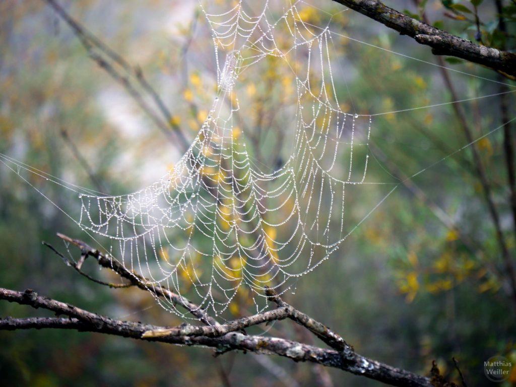 Spinnenetz mit eichgezeichnetem gelben und grünen Herbstlaub dahinter