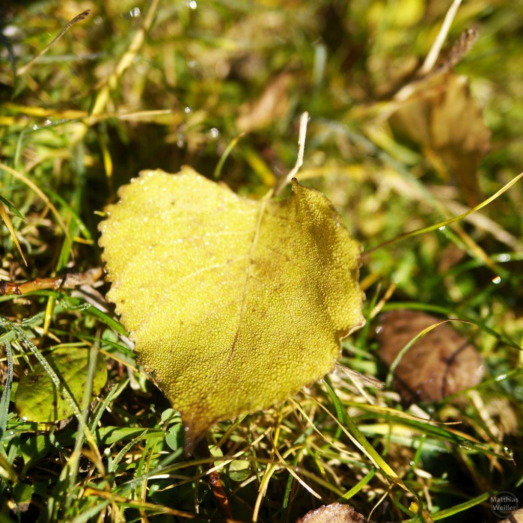 gelbes Blatt mit Taunässe, Makroaufnahme