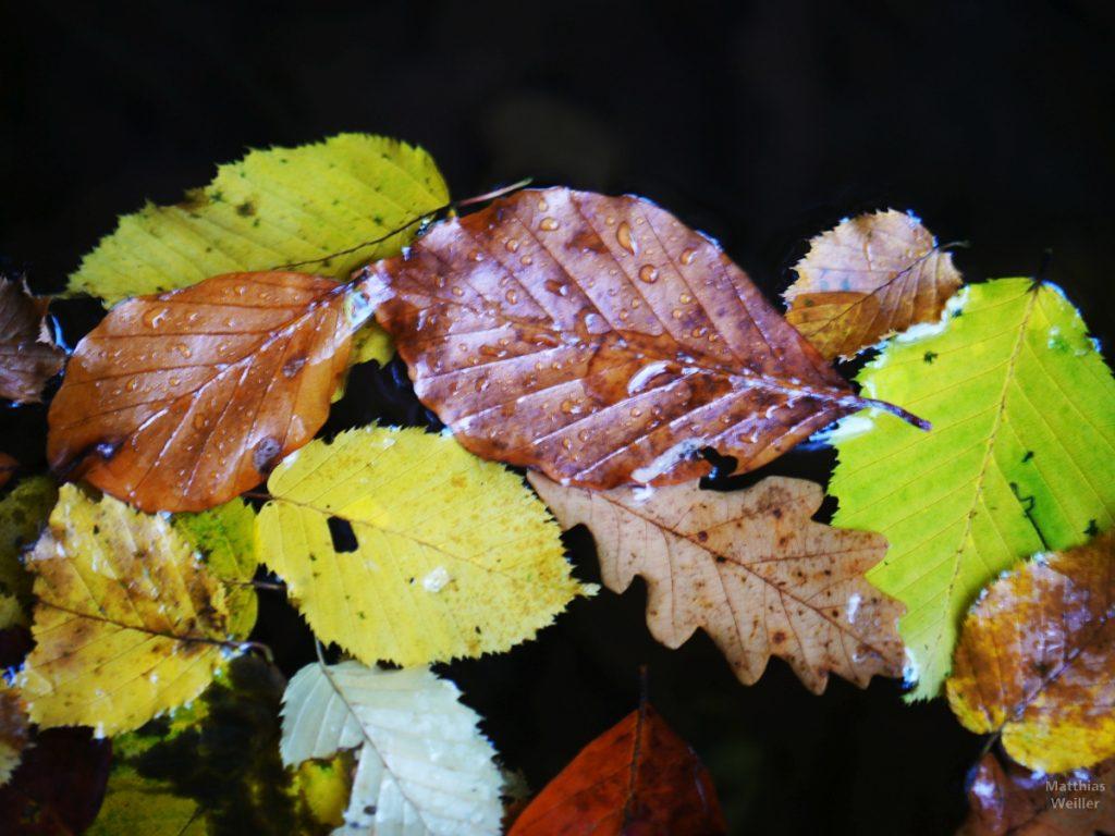 Buchenlaub und Haselnussblätter im Wasser schwimmend und benetzt