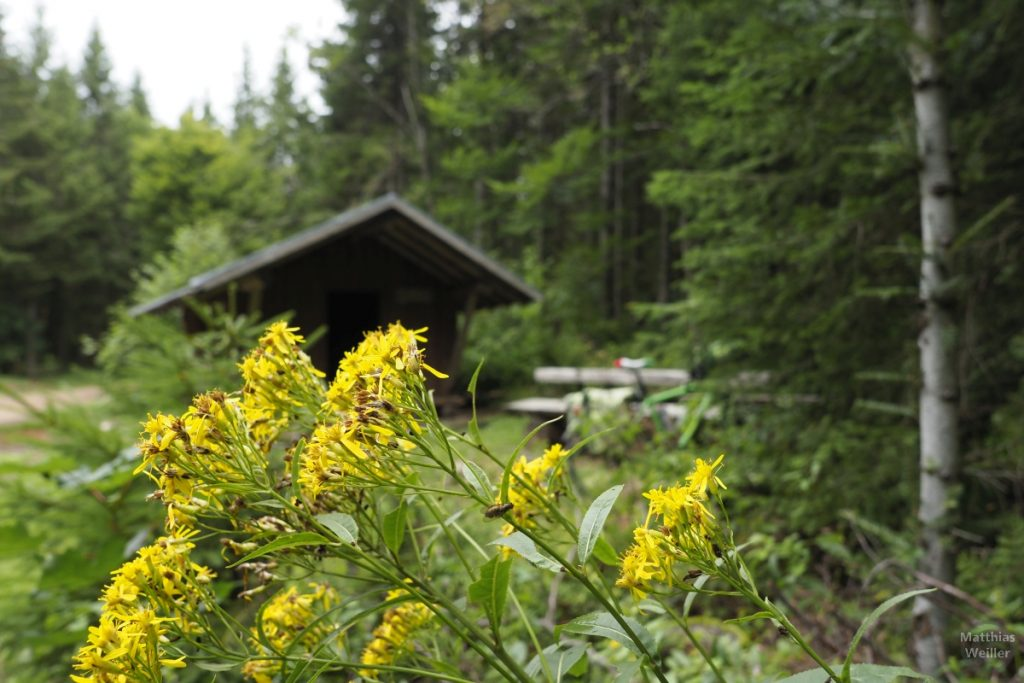 Blume mit Waldhütte, Trubelmattskopfrunde
