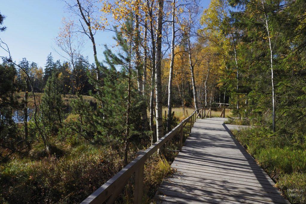 Wildseemoor Kaltenbronn, Steg, mit Herbststimmung