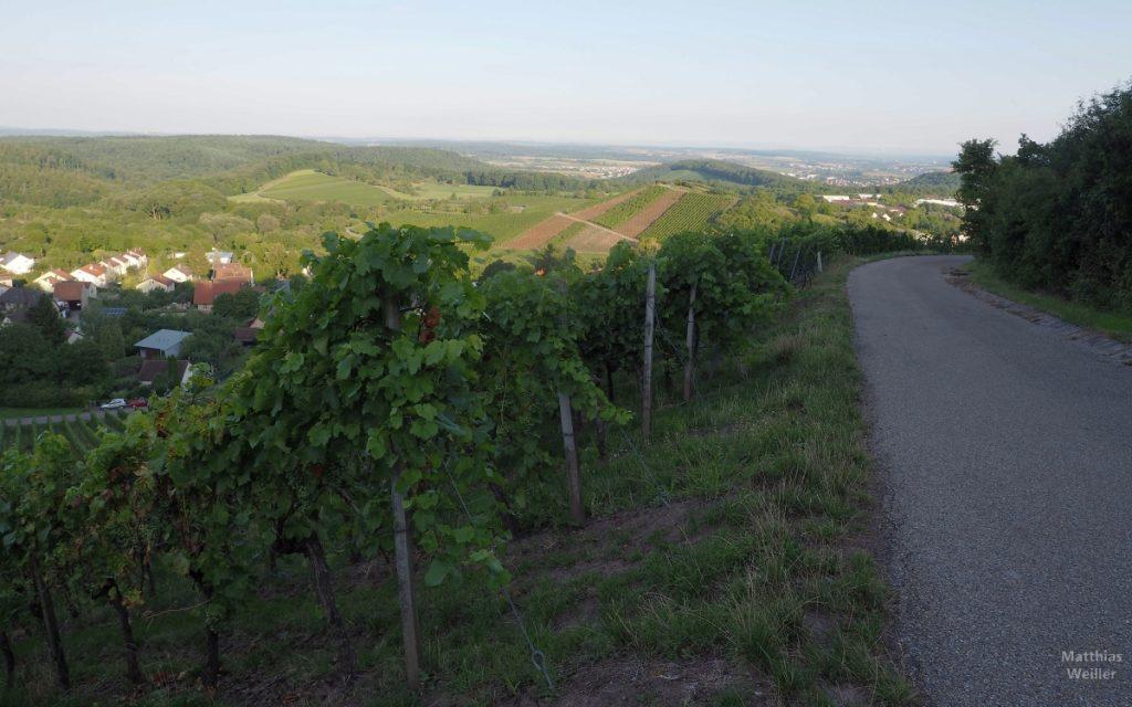 Panoramablick über Weinberghügel im Zabergäu bei Sternenfels