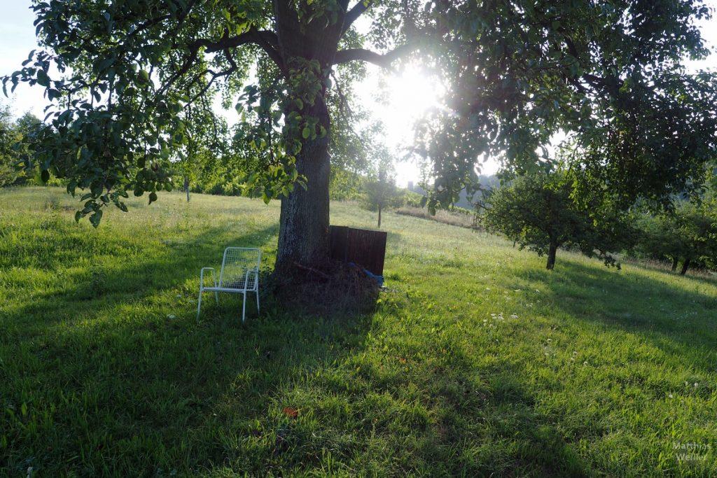 Stuhl vor Baum auf Streuobstwiese im Gegnlicht
