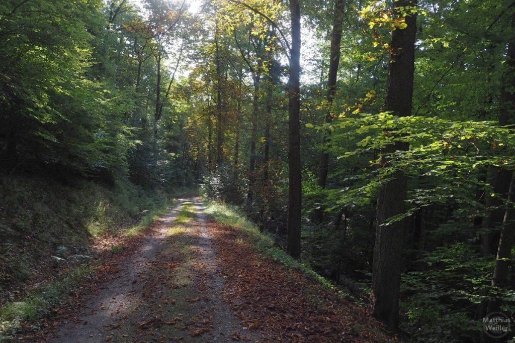 Lichtdurchflutetes Herbstwaldbild mit Piste