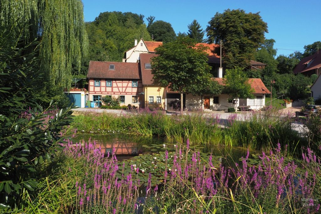 Seerosenteich mit lila Lippenblütlern, Trauerweide und Fachwerkhintergrund in Hohenklingen