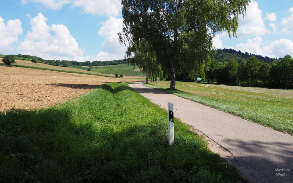 offene Alleenlandschaft mit Straße bei Kürnbach
