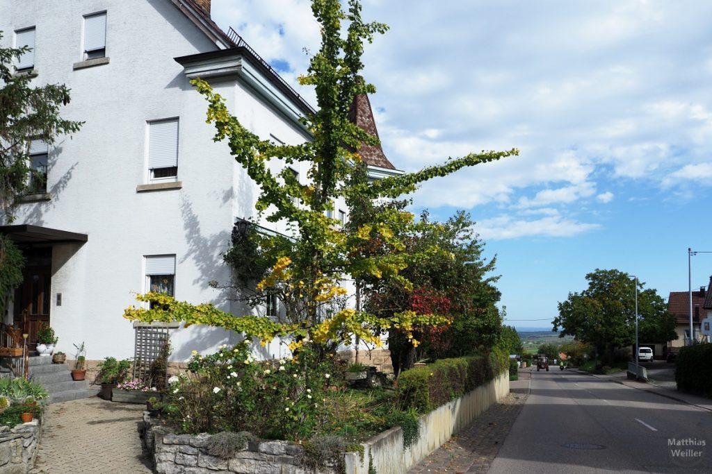 Türmchenhaus mit Herbstbaum und Straße in Nussdorf