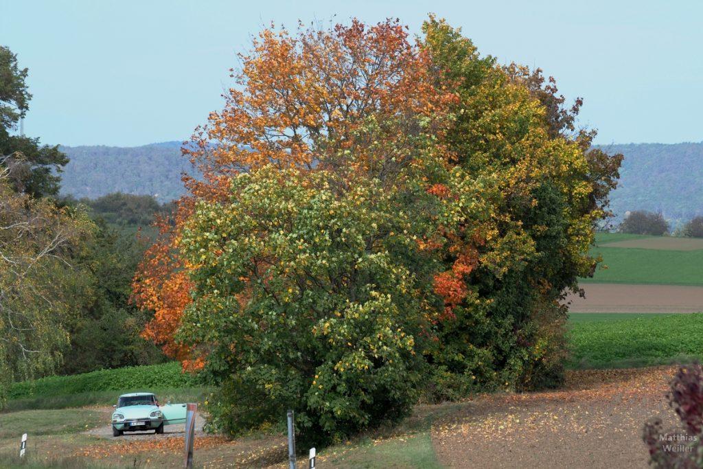 Herbstbäume mit altem Citröen