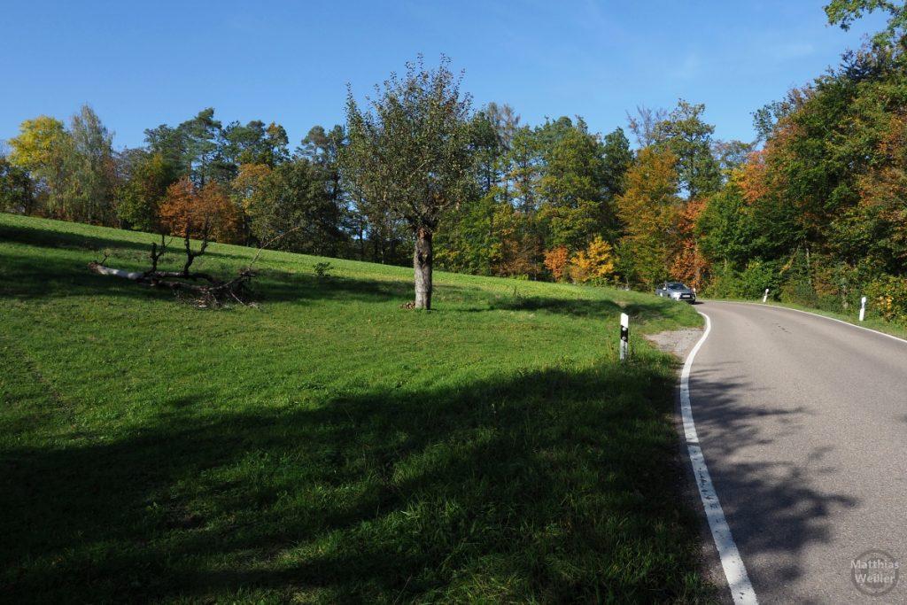 Straßenkurve mit Herbstlaub und Streuobstwiese bei Häfnerhaslach