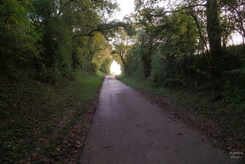 asphaltierter Hohlweg Richtung Sulzfeld