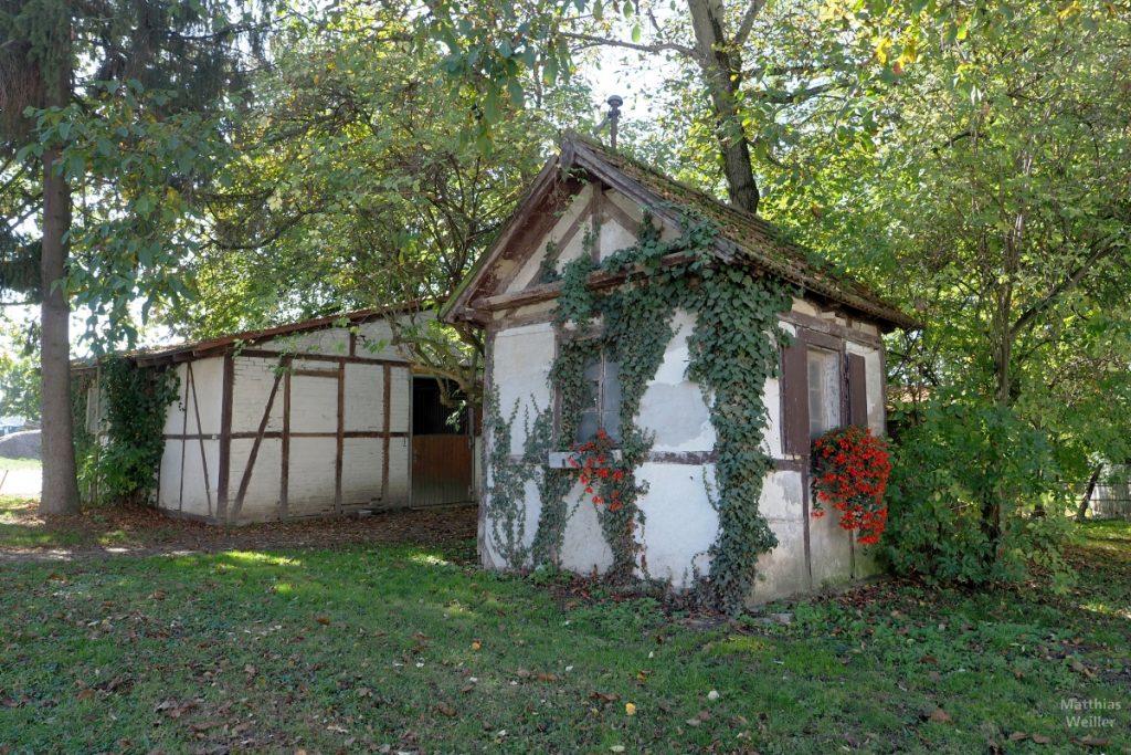 Fachwerk-Gartenhäuschen mit Efeu und roten Geranien am Batzenhof