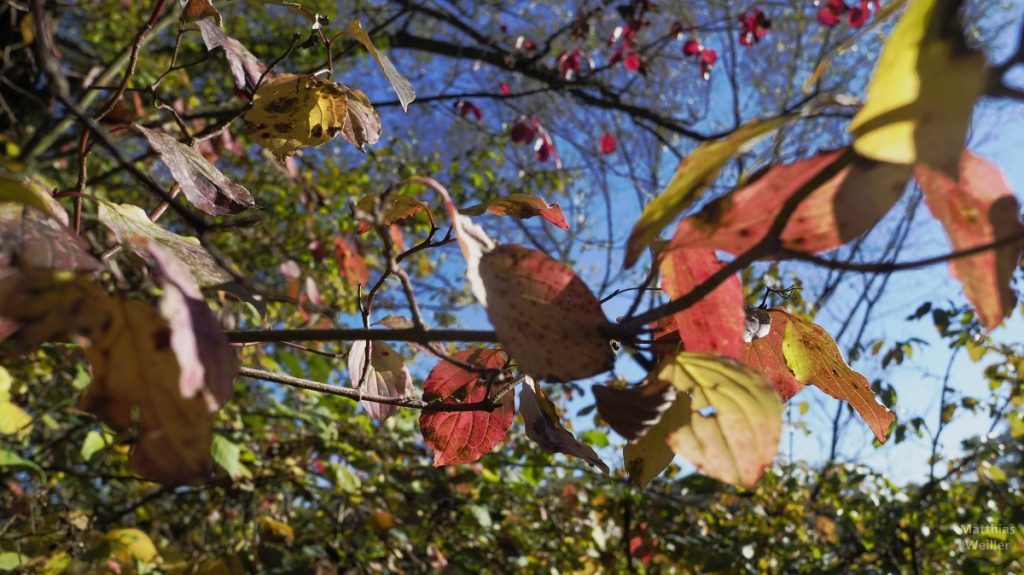Herbstlaub nah