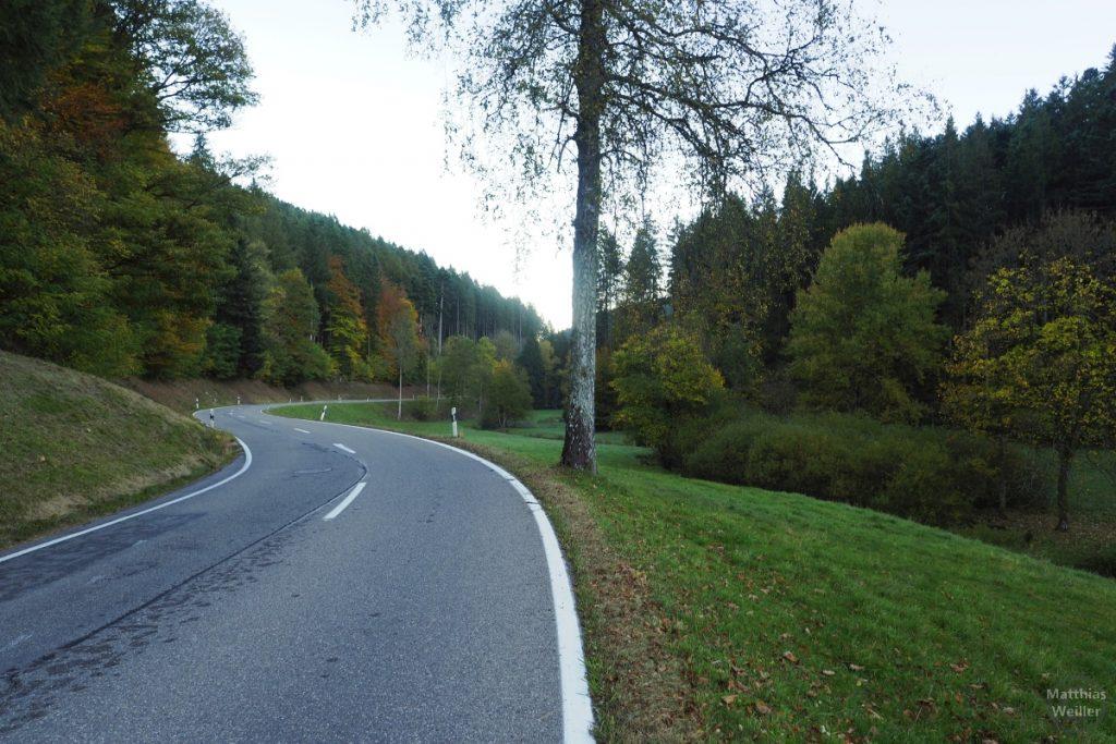 Herbstal mit Kurve