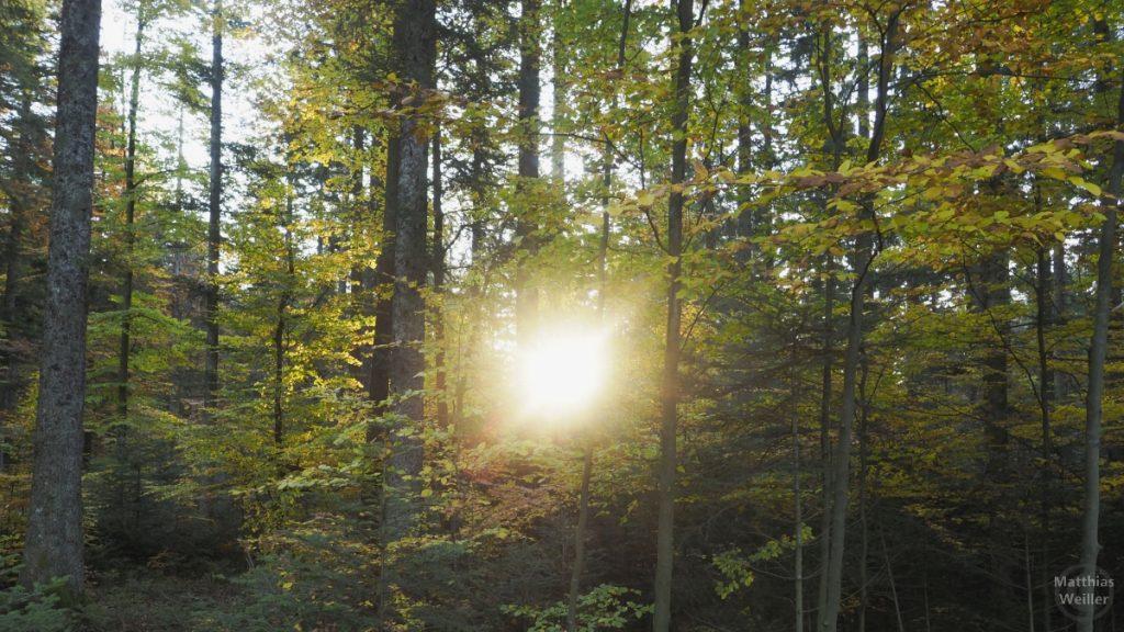 Sonnendurchstich im Herbstwald