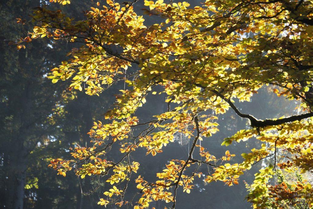 Herbstlaub mit Spinnweben
