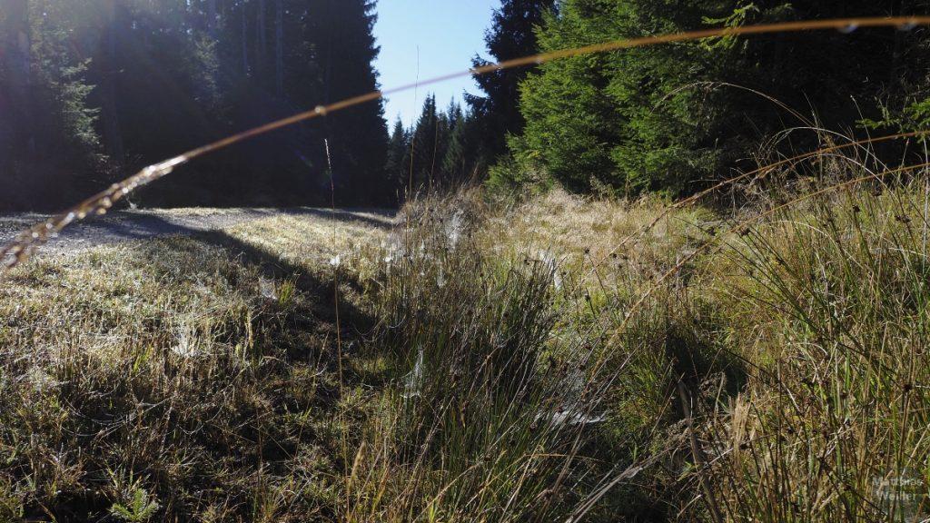 Spinnweben am Waldboden mit Weg