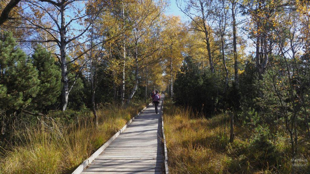 Herbst im Wildseemoor, Steg mit Wanderern