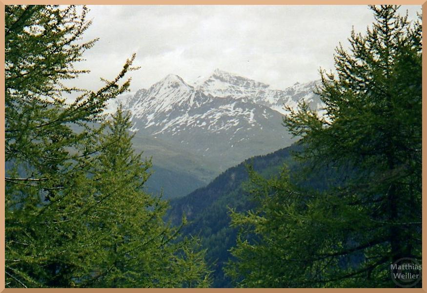 scheneebedeckte Gipfel mit Lärchengrün auf der Nordseite des Gaviapasses