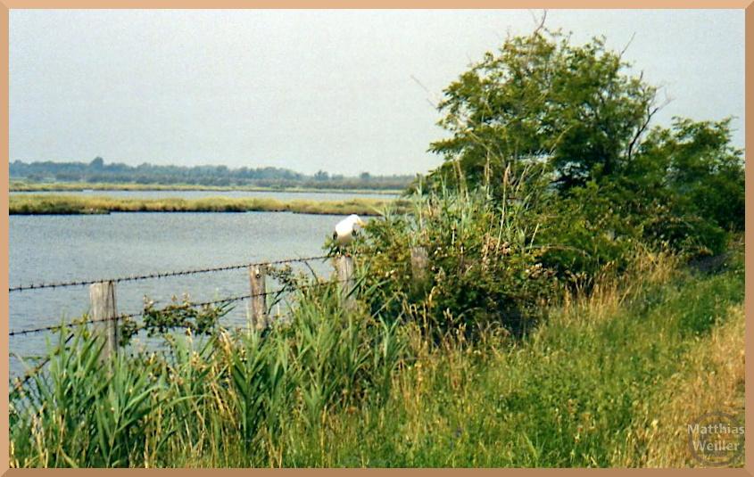 Laguna Caleri mit Möwe