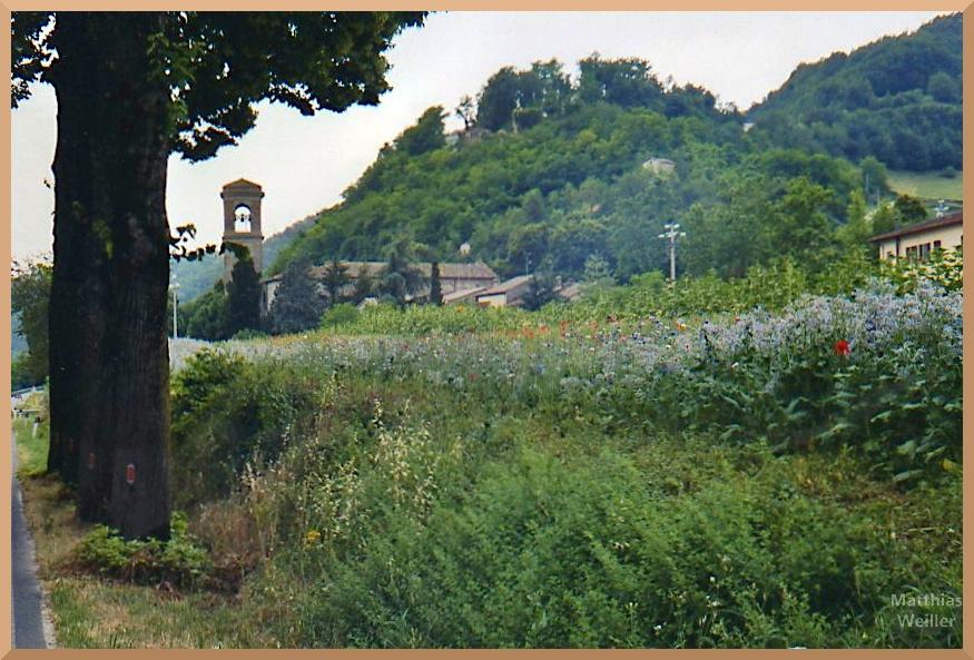 lila Blüten mit Klatschmohn und Grünbewuchs, Kirchturm, Landhaus im unteren Bidente-Tal