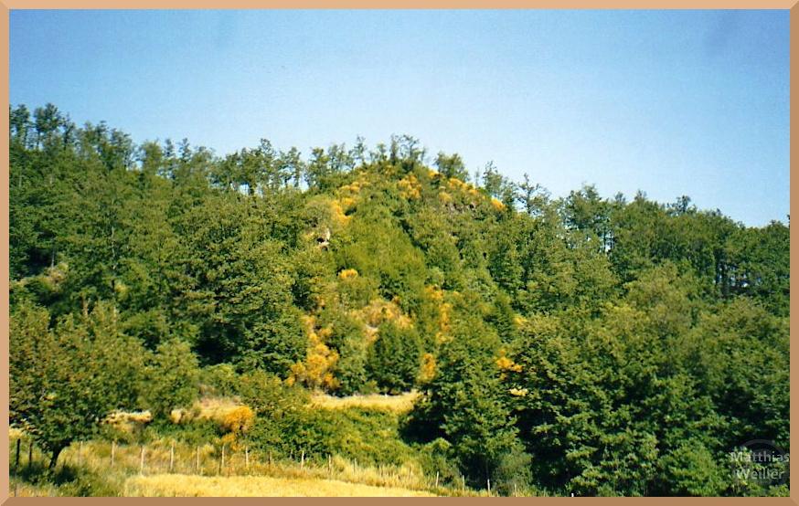 Hügel mit Ginstergelb mit lichtem grünen Wald, von Poppi zum Passo di Fangacci