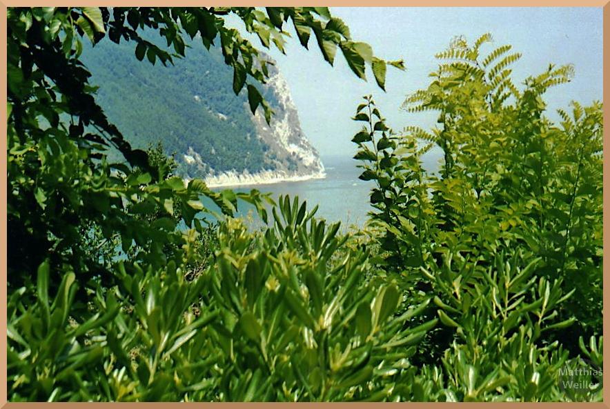 Felsblick mit Meerausschnitt durch grünes Pflanzenfenster, Riviera del Conero