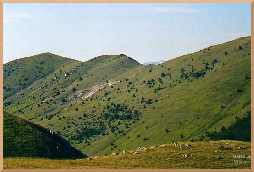 grüne Wiesenhänge der Berggrate mit verteilten Einzelsträuchern und Bäumchen