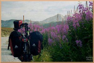 hochgewachsene rosa Lippenblütler mit Velo im Vordergrund, Berge im Hintergrund, Campo Imperatore
