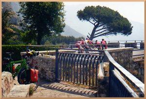 Rennradgruppe auf der Amalfistraße, Pinie
