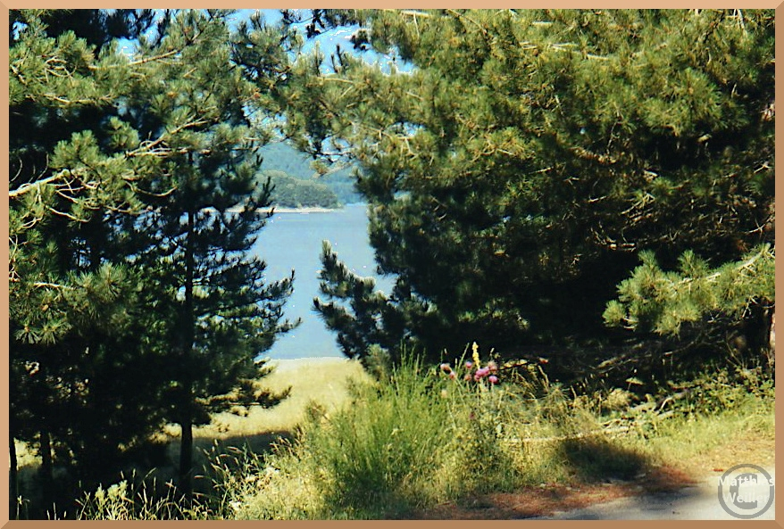 blauer Ampollino-See, durch Kiefernfenster betrachtet
