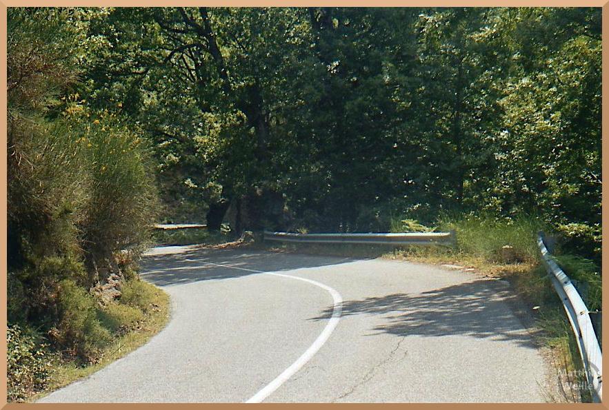 geschwungene Straße durch Eichenwald, bei Cotronei