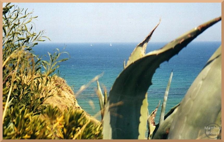 Blick auf blaues Meer durch Agave, in der Ferne Segelboote
