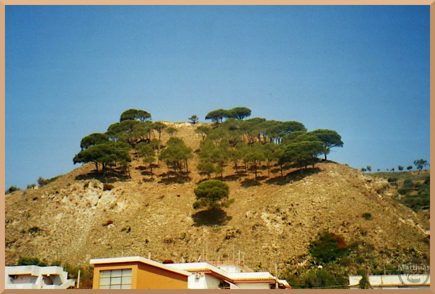 Pinienbäume auf Ockerhügel