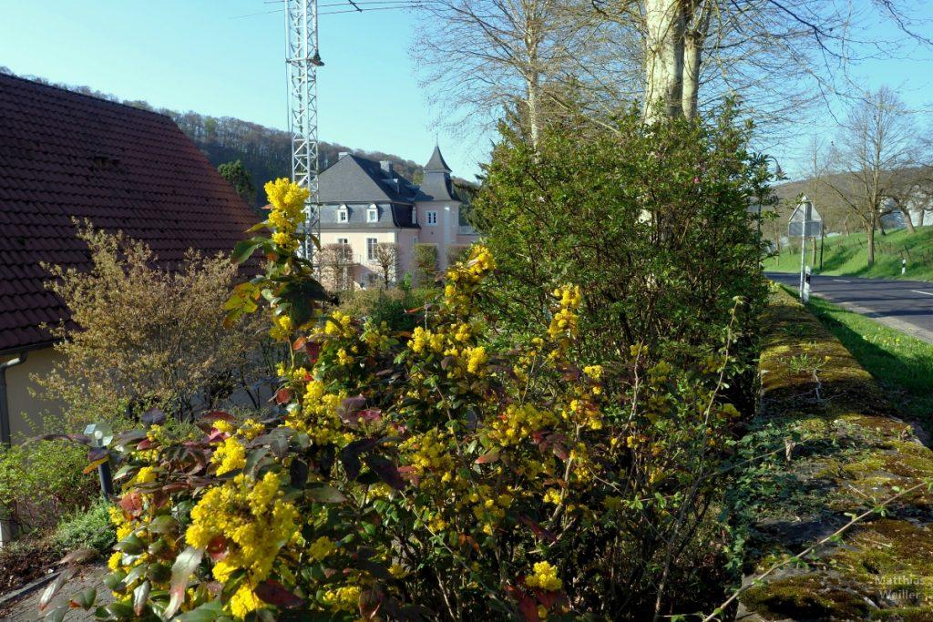 Blick von Straße über gelbem Strauch zum Château de Born