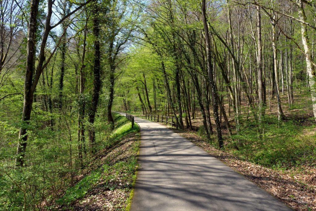 frisch ausgeschlagene grüne Buchen auf Bahntrassenradweg nach Consdorf