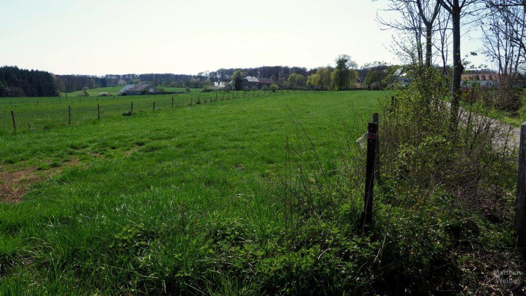 Weideland bei Consdorf