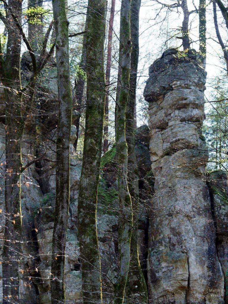 Schmale Fesltürme zwischen Baumstämmen, Kleine Luxemburgische Schweiz, Müllerthal