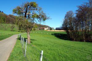 Kleine Straße durch Weideweisen mit Streubostbäumen und Hofgut oberhalb, bei Hoesdorf