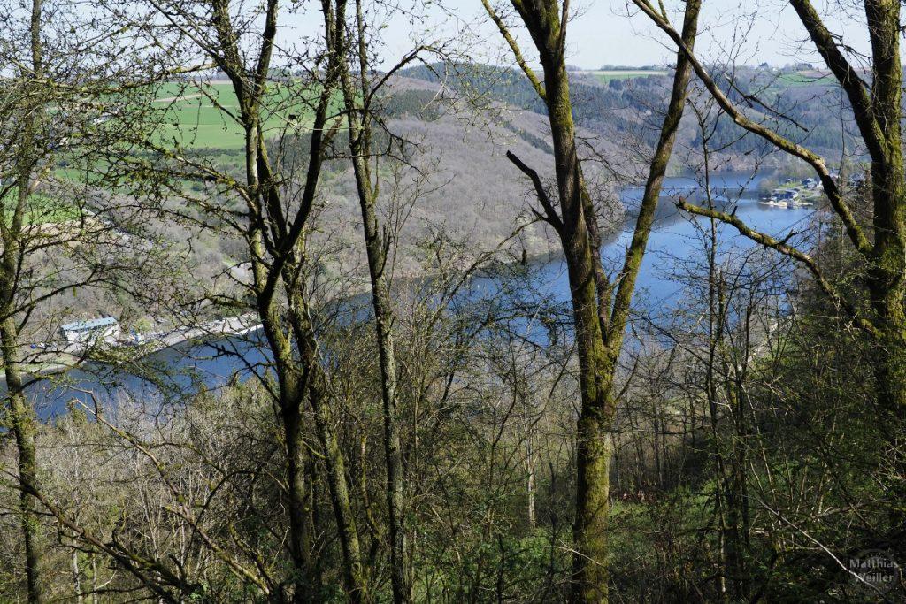 Blick von oben auf Stausee Obersauer durch noch laubfreie Bäume