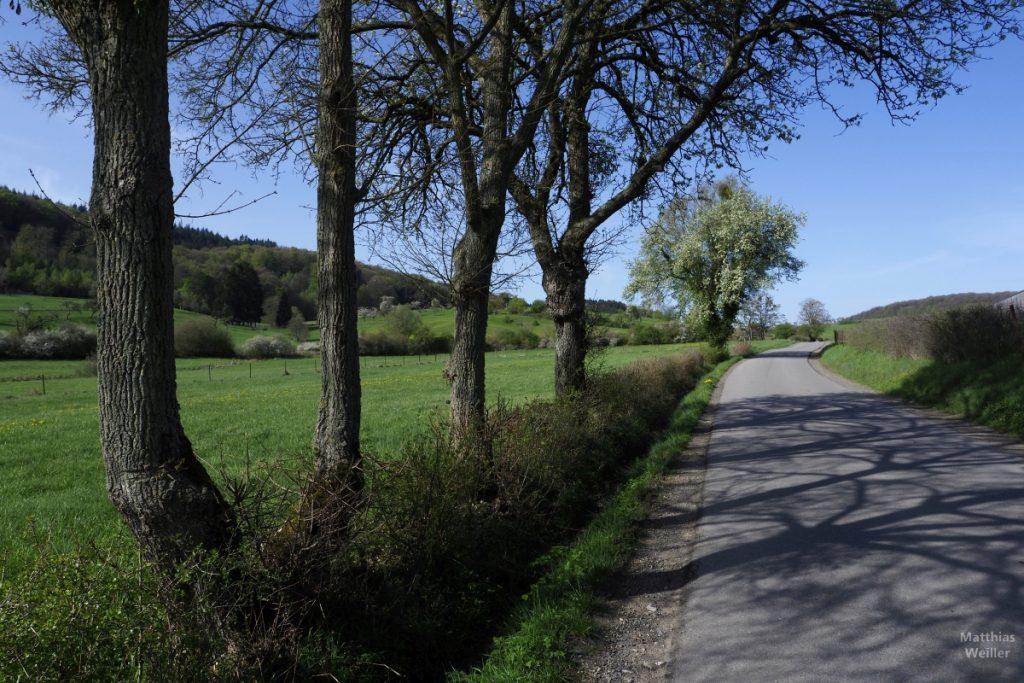 Weise- und Streuobstwiesen mit Straße bei Medernach