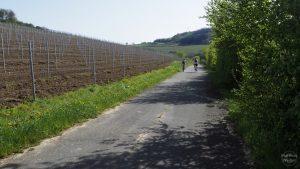 Moseltalradweg Temmels - Nittel