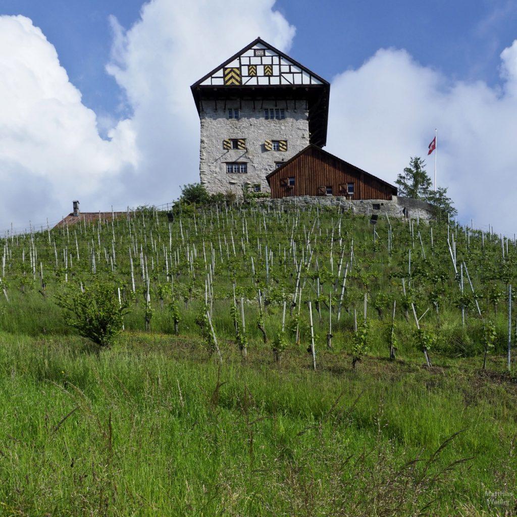 Burg Altstätten über Weinberg