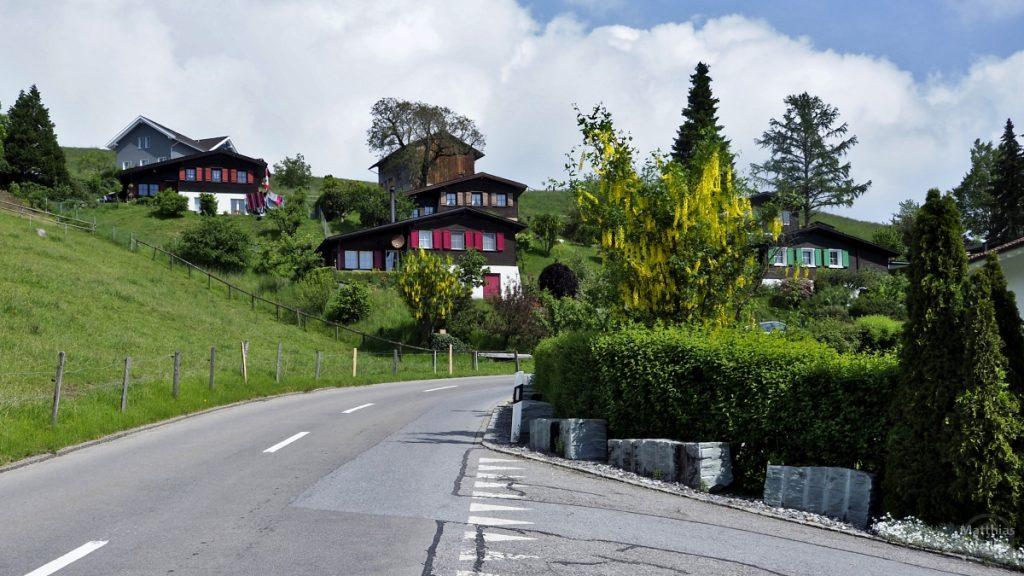 Chaletartige Holzhäuser mit farbigen Fensterläden an grünem Berghang mit Straßenkurve und Goldregen