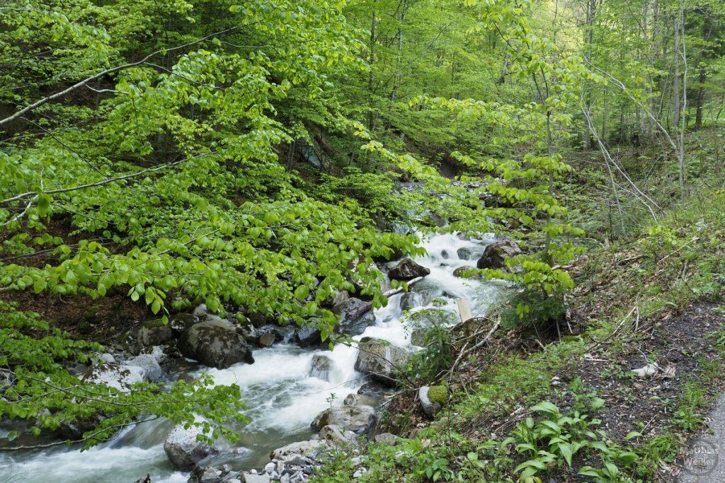 Rauschender Bergbahc mit Buchengrün, Auffahrt Vorderhöhi, Nordseite