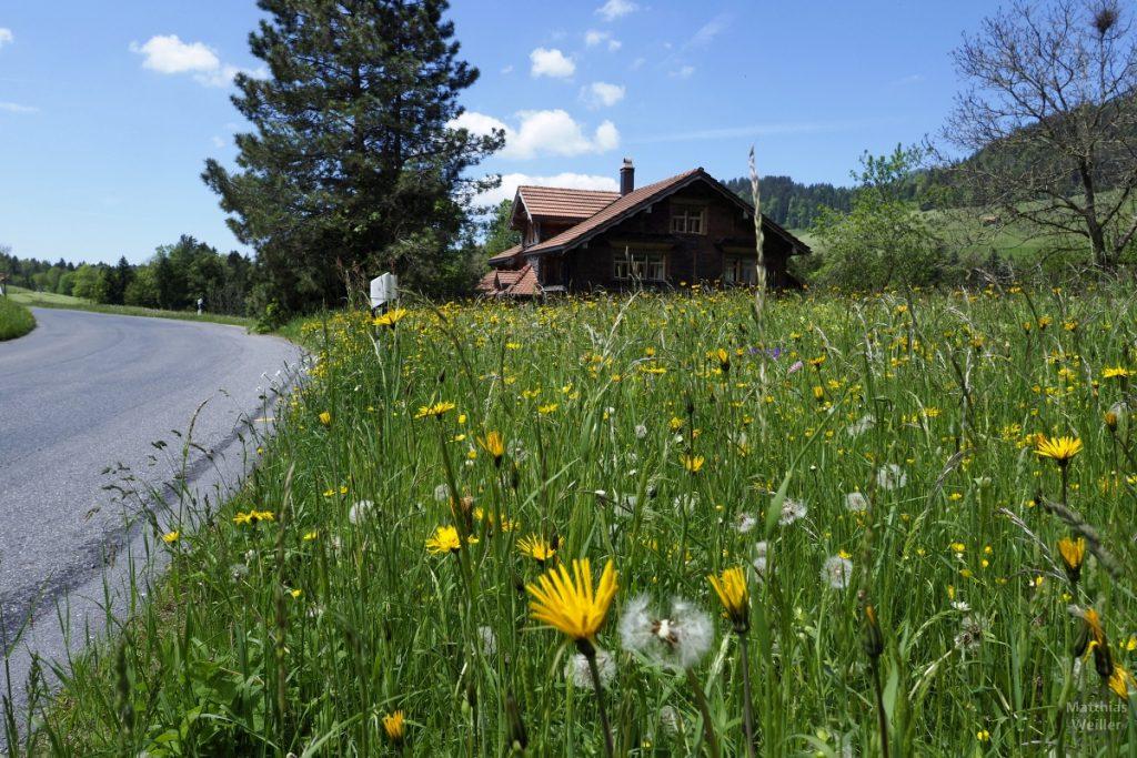Blumenwiese mit Berghaus aus Bodenperspektive der Straße, Radroute Ricken - Wattwil