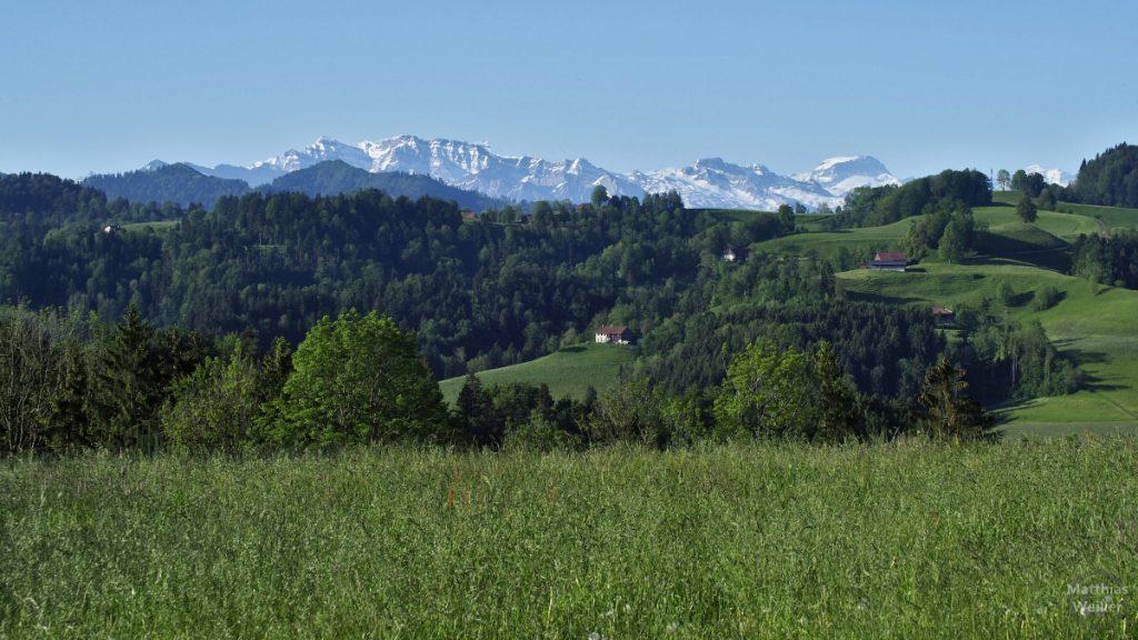 Grünhügelland mit Schnee-Gipfelkette im Hintergrund, Sädelegg